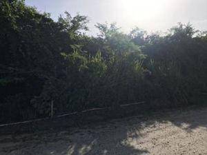 Terrain à vendre Cayenne Guyane (97300)