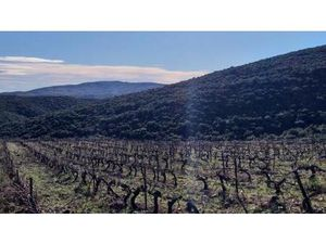 Terrain à vendre Rasigueres Pyrenees orientales (66720)
