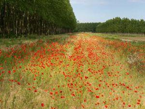 Terrain à vendre Bourg 500 m2 Gironde (33710)