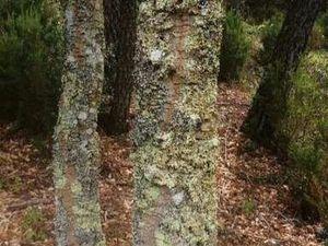 Loue terrain boisé